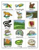 Camping Forest Flashcards Theme Words Poster Vocabulary Pi