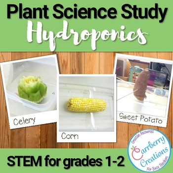 Plants Experiment: Hydroponics