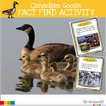 Canadian Goose Fact Find