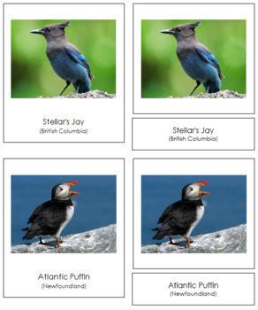 Canadian Provincial Birds: 3-Part Cards