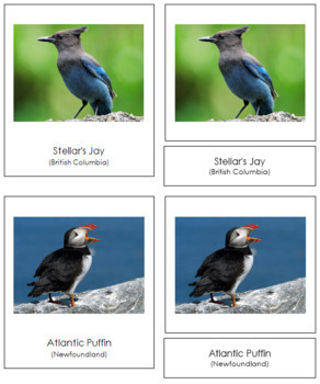 Canadian Provincial Birds: 3-Part Cards