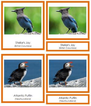Canadian Provincial Birds: 3-Part Cards (color cards)