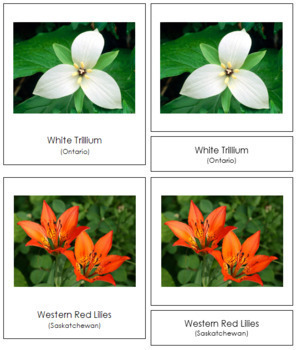 Canadian Provincial Flowers: 3-Part Cards