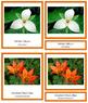 Canadian Provincial Flowers: 3-Part Cards (color borders)