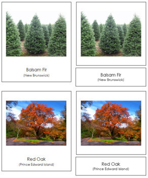 Canadian Provincial Trees: 3-Part Cards