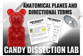 Candy Dissection Lab- Learning Anatomical Directional Term