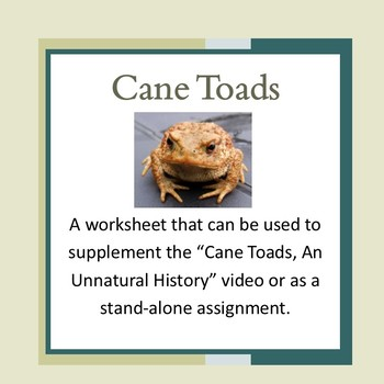 Cane Toads -Invasive Species