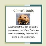 Cane Toads -Invasive Species