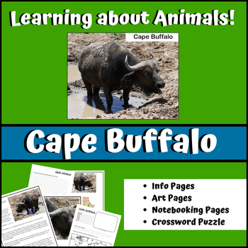 Cape Buffalo - Learning About Animals Unit