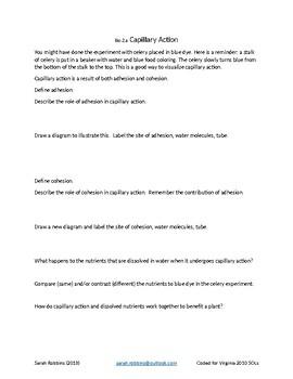 Capillary Action Assessment