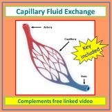 Capillary Fluid Exchange Made Simple - Video Supported