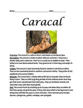 Caracal - Desert Lynx review article facts lesson questions vocabulary