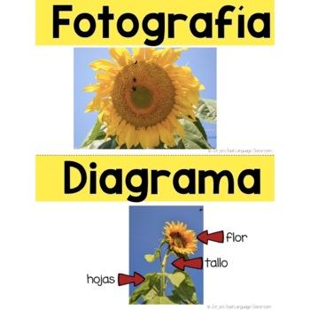 Características del texto - Text Features in Spanish