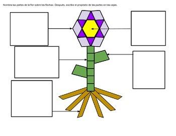 Características de plantas y figuras planas: Una unidad integrada
