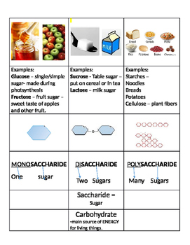 Carbohydrate Graphic Organizer