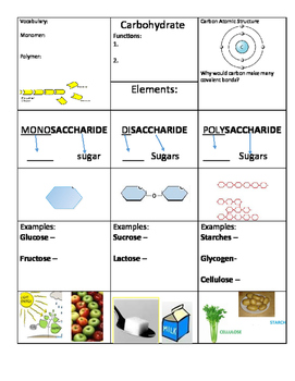 Carbohydrate Note Taking Graphic Organizer