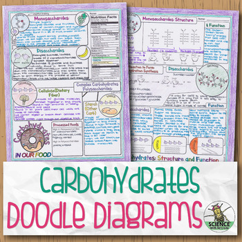 Carbohydrates Biology Doodle Diagram