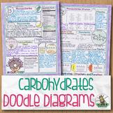 Carbohydrates Biology Doodle Diagram