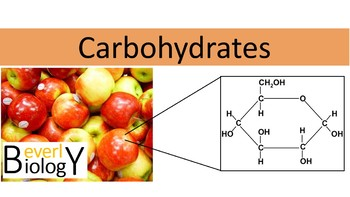 Carbohydrates PowerPoint (with student handout)