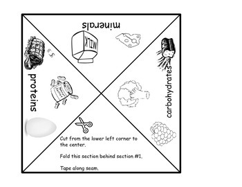 Carbohydrates, Proteins, and Minerals Interactive Pyramid Foldable
