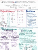 Carbohydrates Summary Sheet