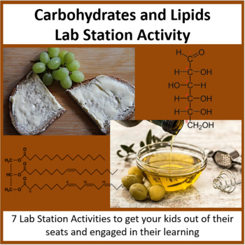 Carbohydrates and Lipids - Lab Station Activity