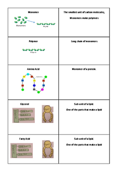 Carbon Based Molecule Vocab FLASH CARDS