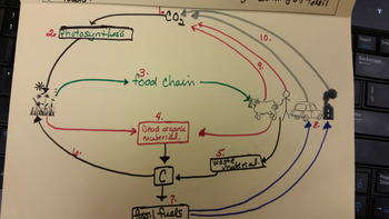 Carbon Cycle - Biogeochemical Cycles