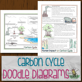 Carbon Cycle Reading And Coloring Worksheets Teaching