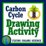 Carbon Cycle Drawing NGSS MS-LS1-6  and MA 7 MS-LS2-3