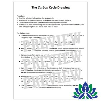 Carbon Cycle Drawing Activity Middle School NGSS MS-LS1-6  MS-LS2-3
