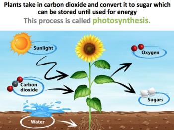 Carbon Cycle (Editable)