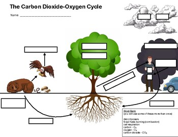 Carbon Cycle Fill-In Worksheet