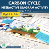 Carbon Cycle Interactive Diagram Activity with Task Cards