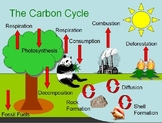 Carbon Cycle, Greenhouse Effect, Global Warming WebQuest and PowerPoint
