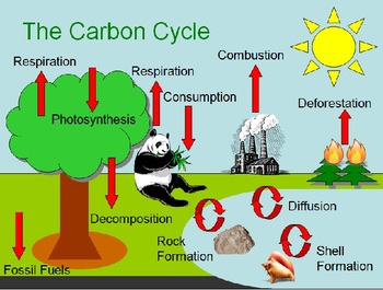 photosynthesis and global warming relationship quizzes