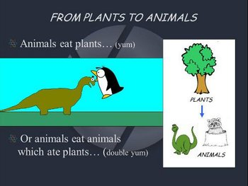 Carbon Cycle, Greenhouse, and Global Warming PowerPoint