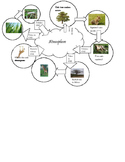Carbon Cycle Mobile