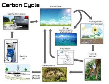 Carbon Cycle Poster