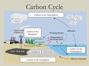 Carbon Cycle Review Notes.