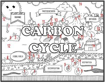 Carbon Cycle Seek and Find Science Doodle Page