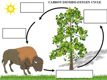 teaching activity the carbon dioxide-oxygen cycle answer key