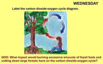 Carbon Dioxide-Oxygen Cycle Review