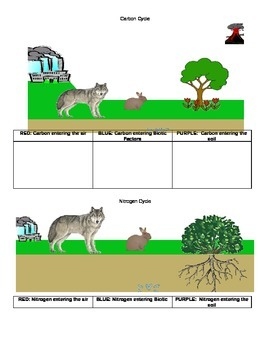 Carbon and Nitrogen Cycles NOTES PAGE