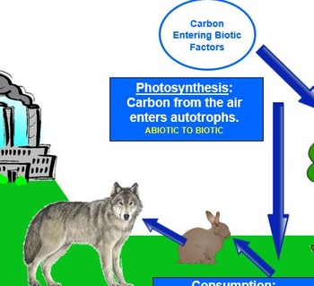 Carbon and Nitrogen Cycles PPT
