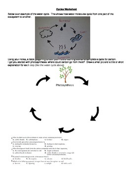 Carbon and Nitrogen Cycles Worksheet
