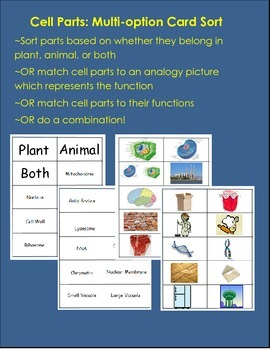Card Sort: Cell Parts/Organelles--Three Card Sorts in One!