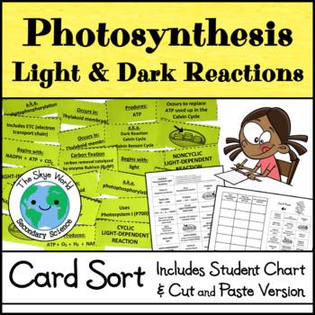 Card Sort - Photosynthesis