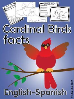 Cardinal Bird Facts By Lita Lita Teachers Pay Teachers