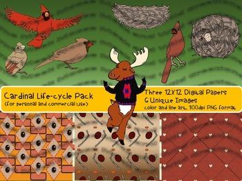 Cardinal Life Cycle Clip Art Pack
